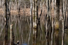 Basic-Photography-II-hw-week-1-light-birch-reflection